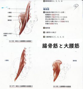 腸骨筋と大腰筋